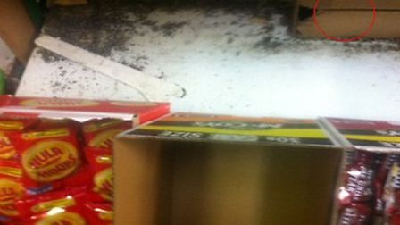 Mice dropping mixed with rodent poison and dirt behind and below boxes of crisps, also gnawed box be