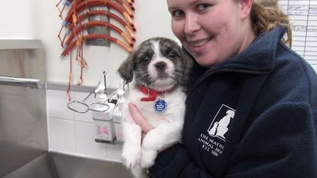 Milly ended up at The Mayhew because her owner died