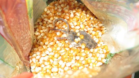 The dead mouse in the packet of popping corn