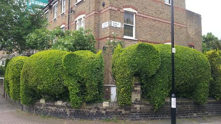 The famous elephant hedges in Blackstock Triangle, a previous winner of Best Small Neighbourhood