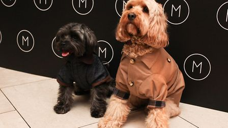 Dogs dress up for the event