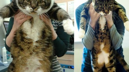 Huggy Bear before, left, and after