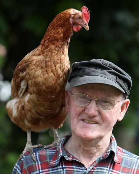 Forget about a parrot, a hen is a better companion