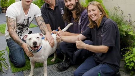 Gordon the deaf staffie has been adopted from Mayhew Animal Home after being found abandoned last ye