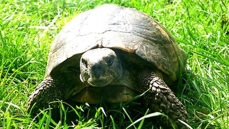 This tortoise was found on a street in Cricklewood