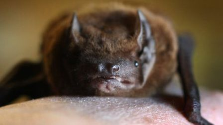 The company destroyed a pipistrelle bat roost (Pic: PA)
