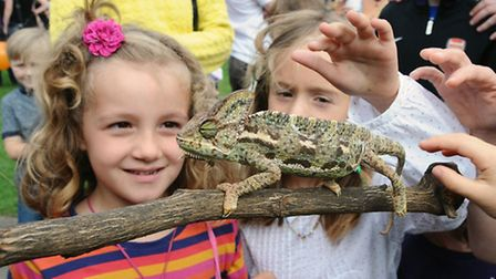 Children got to meet Gizmo the veiled chameleon at the Angel Canal Festival