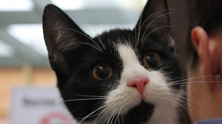The kitten got stuck in the electricity pipe, which it could have accessed in Islington or Hackney.