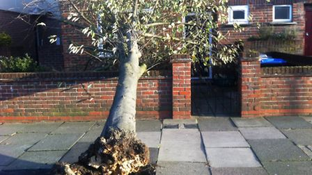 A tree has fallen on this house is Chesham Street in Neasden