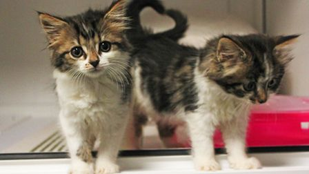 Holly and Robin have been rehomed after Mayhew Animal Home took them in