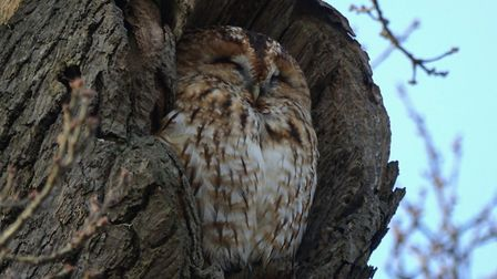 A real hoot! This amazing photo of a tawny owl has won Picture of the Week. Photo: Val Bond