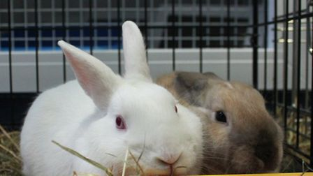 The rabbits were tossed out of a car boot and abandoned on Hampstead Heath