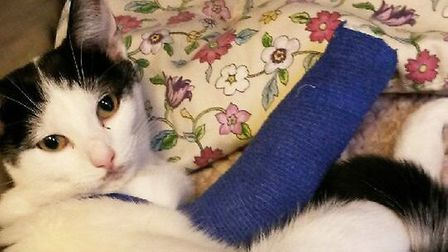 Molly is on the road to recovery