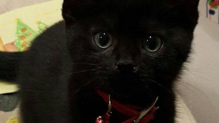 Five-month-old Daffy was found killed in Archway