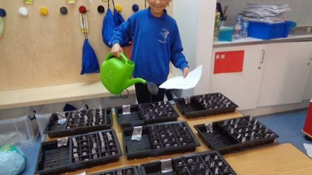 A student from Vittoria Primary waters the seeds