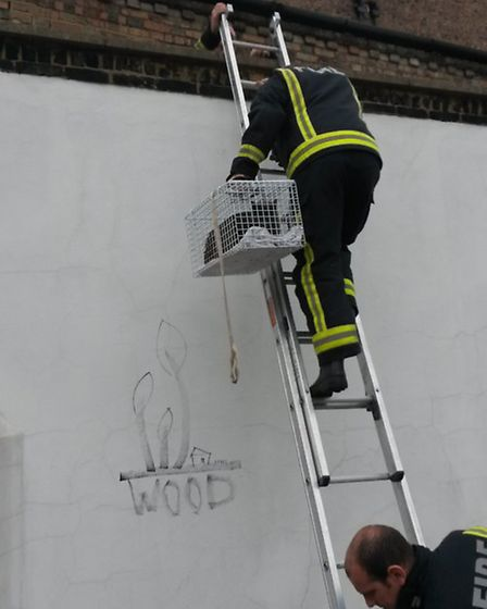 Willesden Fire Brigade needed two ladders to rescue trapped Smokey the Cat following a call from May