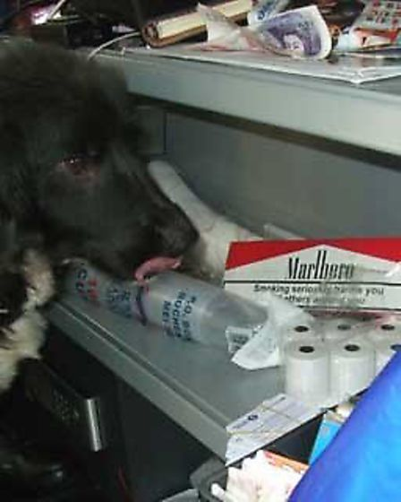 A sniffer dog uncovered the illegal cigarettes (Pic: Brent Council)