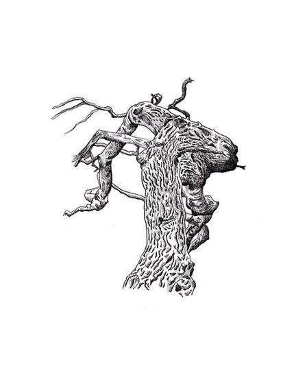 Jennifer Cooke illustrated The Tree Climber's Guide