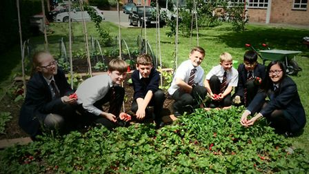 Pupils from St Gregory's Catholic Science College harvesting strawberries