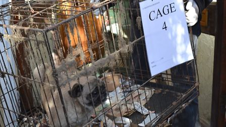The caged dogs found in Seago-Madi's home ahead of last year's conviction