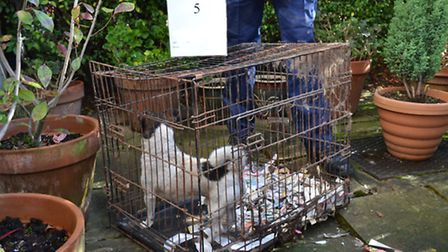 She was banned from keeping animals for life last year for keeping 16 dogs caged in her home