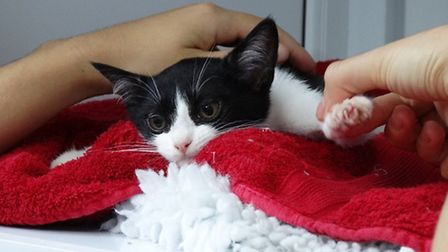 Pick &Snip project is part of Mayhew Animal Home's outreach work