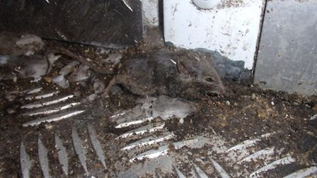 This frozen mouse was found near the walk-in freezer (Pic: Ealing Council)