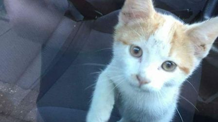 This kitten was found inside the engine compartment of a van in Islington. Picture: Lillys Legacy