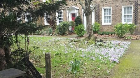 Essex Road is blooming. Picture: WILL McCALLUM