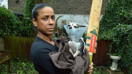 Marie Wilson with her Chihuahua, Madison, in the garden where she was attacked on Thursday. Marie no