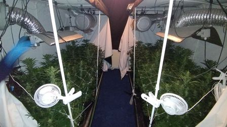 Officers executed a drugs warrant in Hornsey Rise this morning and found two tents of cannabis plant