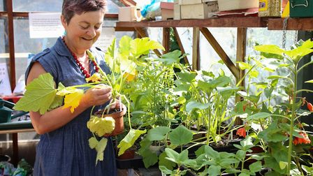 Jenny Morgan, who organises the garden, in the greenhouse at King Henry's Walk Garden this week. Pic