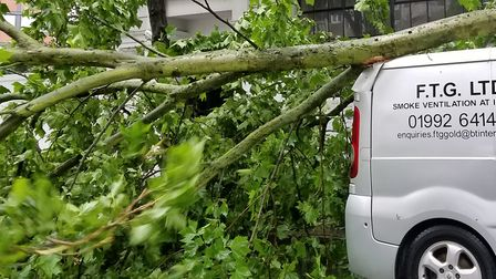 The tree fell across Goswell Road this morning. Picture: Hermon Kidane