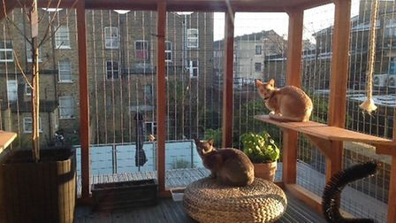 The 'catio': Glamping for cats. Picture: Claire Patel