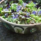 Herb and flower salad