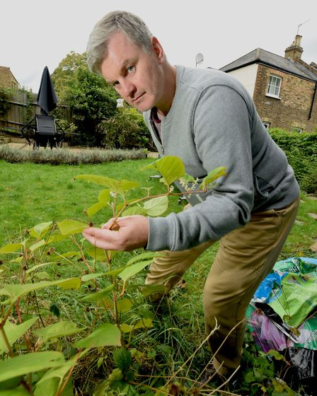 Christopher Morrow inspects the Japanese knotweed which is growing in his Hornsey Rise garden. Pictu