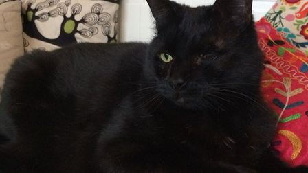 Abandoned one-eyed Sammy looking for a new home with Mayhew's help