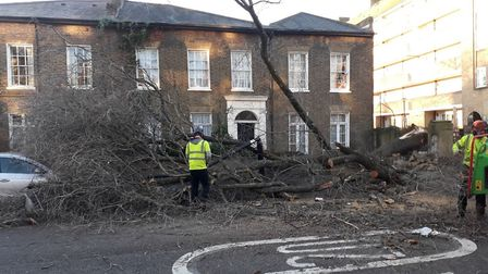 The tree collapsed in Tufnell Park Road at about 5am. Picture: Ramzy Alwakeel