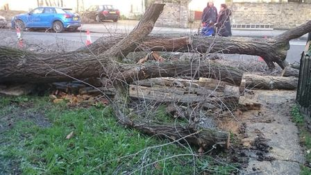 The fallen tree in front of Mehmet Sipahiogle's house. Picture: Mehmet Sipahiogle