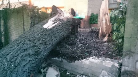 The tree destroyed part of the garden wall. Picture: Mehmet Sipahiogle