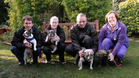 Four of the seven abandoned French Bulldogs brought into the Mayhew in November