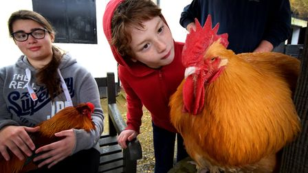 Monday's Easter fun day at Freightliners Farm. Callum Croft, aged eight, with Fred the Buff Orpingto