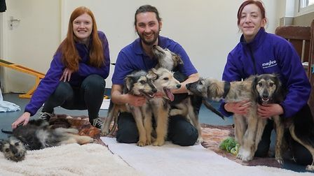 The Mayhew team with the six puppies. Picture: Mayhew Animal Home