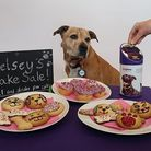 The Mayhew animal charity suggests you might like to hold a bake sale to support it next month. Pict