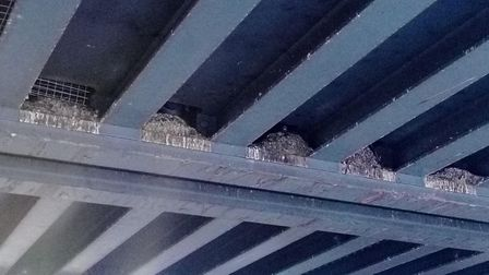 Bird excrement and remains of rotting dead birds inside the Network Rail bridge in Park Avenue. Pict
