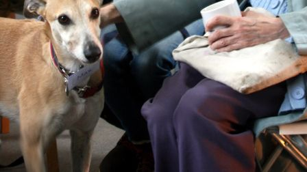 A well-behaved dog at one of the recent Pets Against Loneliness meetings. Picture: Lyn Ambrose