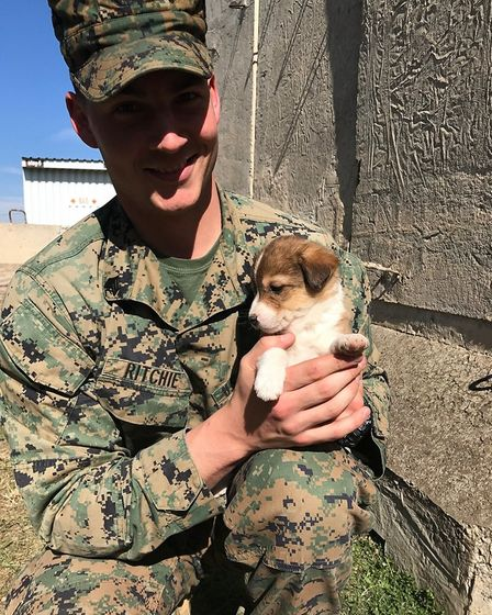 A US marine with one of the stray puppies found on a base in Rustavi, Georgia