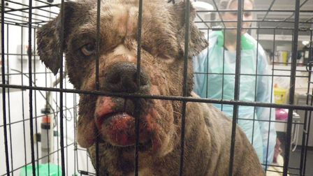 Florence the dog was treated at Harmsworth Memorial Animal Hospital after she was discovered abandon