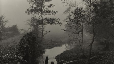 Woods near my House, Somerset, circa 1991. Picture: Don McCullin