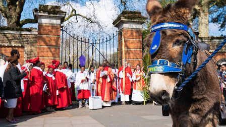 William the donkey at the Blessing of the Palms on Palm Sunday outside of Finsbury Park. Picture: Si